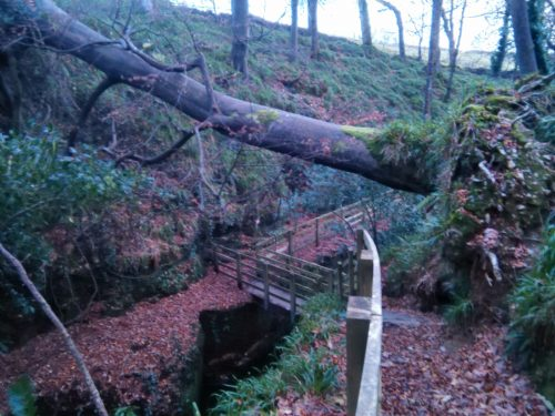 fallen tree on winter solstice walk