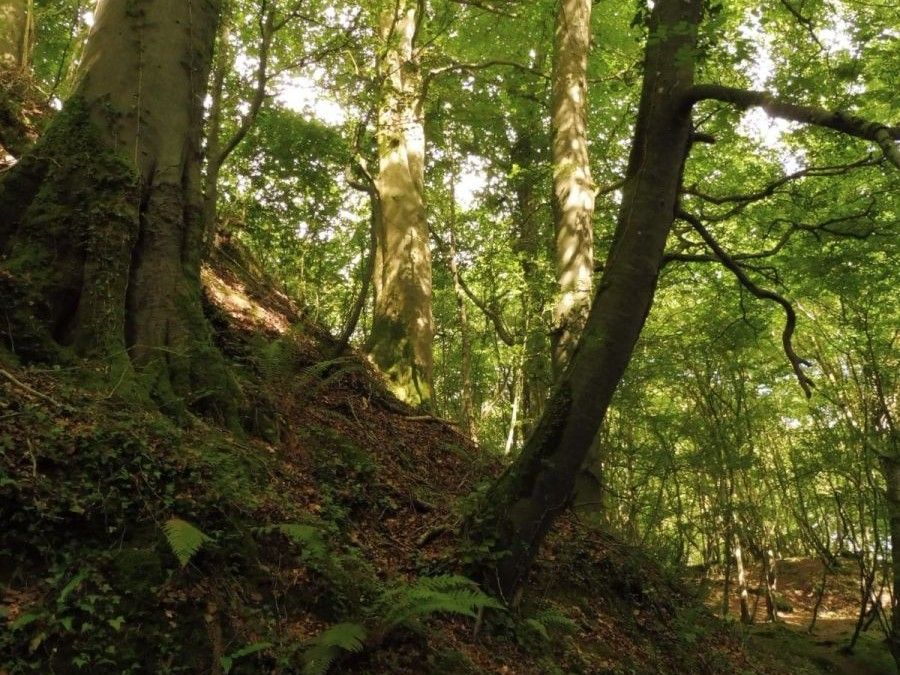 Ogham tree forest