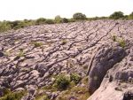 limestone pavement in the Burren Ireland with Earthwise Tours