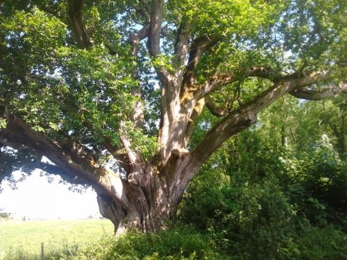 celtic trees workshop
