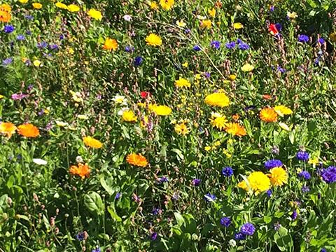 Earthwise appreciates wild flowers