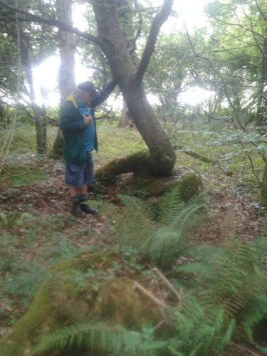 Earthwise Corporate eco-event in woods