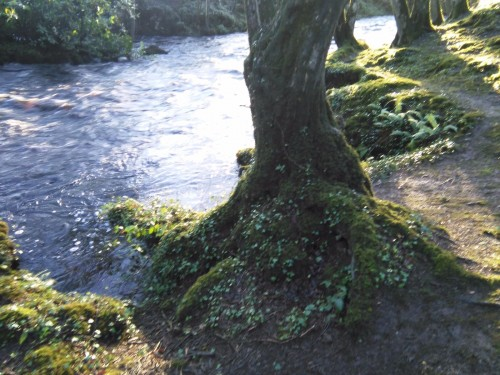 following river Following Gaia trail in South Galway