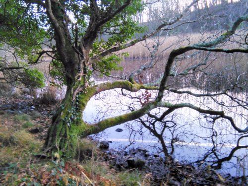 river Inagh Winter Solstice walk