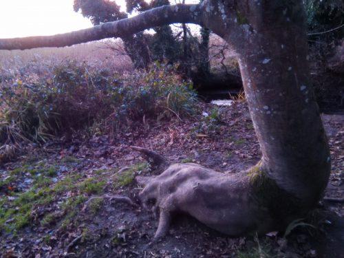 tree claw winter solstice walk