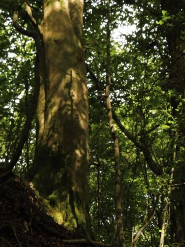 following Gaia Trail