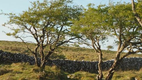 Hawthorn Month