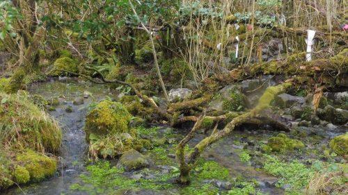 Bealtaine walk in the Burren